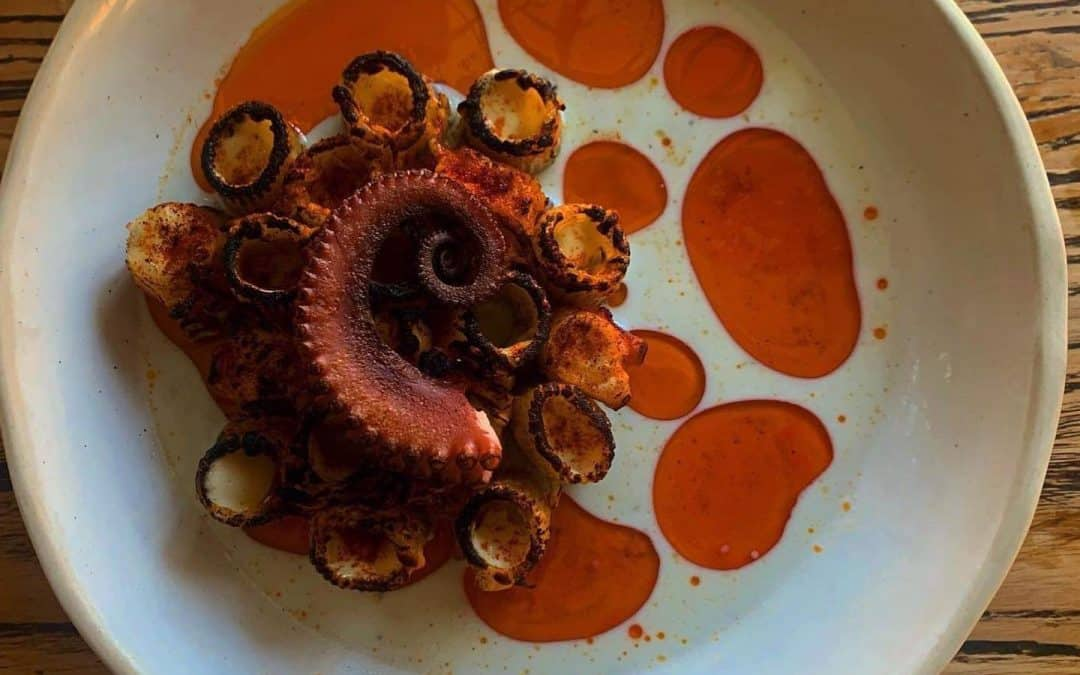 Abrolhos Octopus.